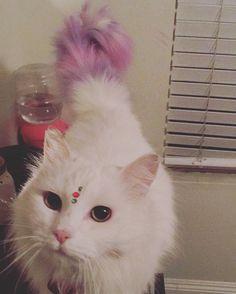 -repinned- Creative cat grooming
