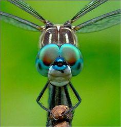 Orange Audubon 2010 Contest Winners Bug Eyed Dragon by Alan Dart