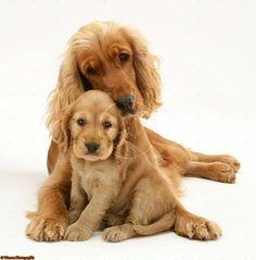 (3) SENASA Webmail :: ¿Te interesa el tema Perros? Echa un vistazo a los Pines recomendados en Perros