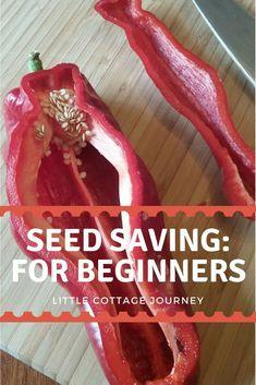 Seed Saving: For Beginners – little cottage journey #gardeningforbeginners