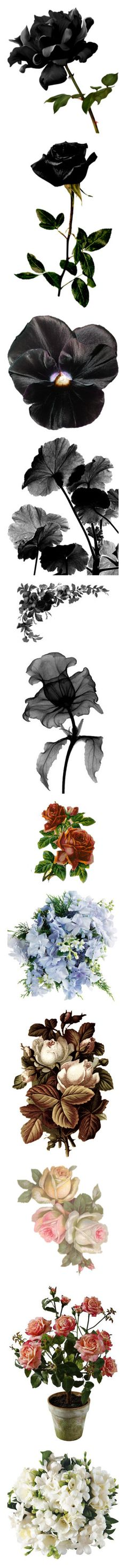 """""""Flowers and leaves III"""" by dracaria on Polyvore"""