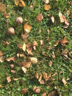 Pilze und Birkenblätter. #gartenblog #laub #herbst Stepping Stones, Outdoor Decor, Home Decor, Mushrooms, Scenery, Fall, Stair Risers, Decoration Home, Room Decor