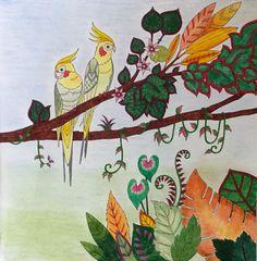 My coloring Johanna Basford Magical jungle Cockatiel. Calopsitte