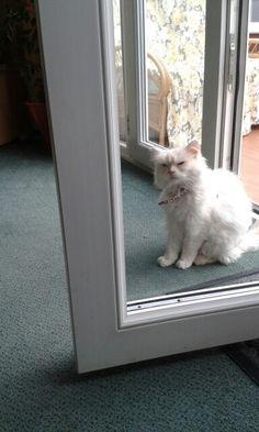 Chinese eye cat
