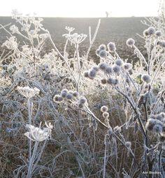 Ann Blockley Artist | Frosty Walk