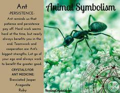 Animal Medicine: Ant by Lizzy Baxter - Current Updates Spirit Animal Totem, Animal Spirit Guides, Animal Totems, Animal Totem Meanings, Animal Symbolism, Power Animal, Animal Magic, Spirit Meaning, Native American Totem