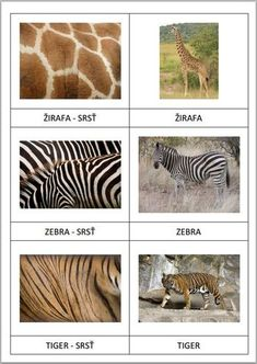 Page 1 of 7 Animal Activities, Book Activities, Preschool Activities, Montessori Science, Montessori Toddler, Image Emotion, Animal Coverings, Le Zoo, Preschool At Home