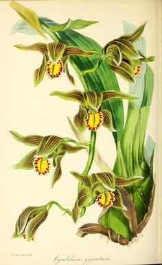 v.12 (1846) - Paxton's magazine of botany, - Biodiversity Heritage Library