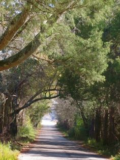 The oldest incorporated town in Alabama has connections to two US Presidents [old photographs & film]   Mooresville tree shaded