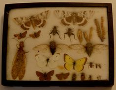 Antique insect mount by Curious Expeditions, via Flickr