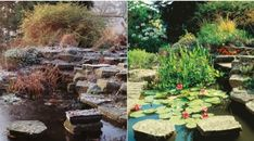 how to take care of koi fish pond Koi pond maintenance is essential in keeping your pond healthy and Koi ponds are a gorgeous focal point for any outdoor space Koi Fish For Sale, Pond Maintenance, Koi Fish Pond, Japanese Koi, Keeping Healthy, True Beauty, Stepping Stones, Outdoor Decor, Beautiful