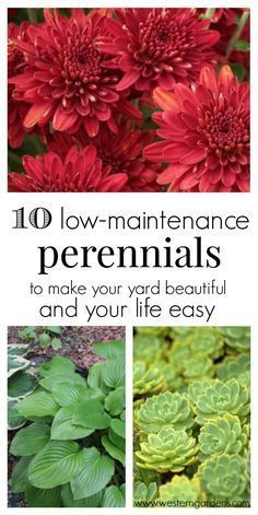 Backyard Landscaping Discover 10 Low-Maintenance Perennials - Western Garden Centers Love having a beautiful yard but dont have a lot of time? You need these 10 low-maintanence perennials! They will make your yard beautiful and your life easier!