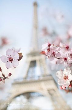 Spring in Paris, Eiffel Tower with Plum Blossoms