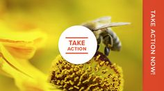 Center for Food Safety Green Farm, Food Safety, Honey Facts, Health Tips, Sadness, Mother Earth, Bees, Sage, Crying
