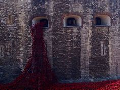 Tower of London 100th anniversary of the outbreak of the First World War with a striking art installation.  Blood Swept Lands and Seas of Red by Paul Cummins features thousands of ceramic poppies pouring out of the tower flowing into the moat and will officially be unveiled on August 5.  The final poppy will be planted on November 11th.  There will be a total of 888,246 poppies planted, with each flower representing a British military fatality from WWI. — at Tower of London.