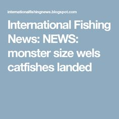 International Fishing News: NEWS: monster size wels catfishes landed