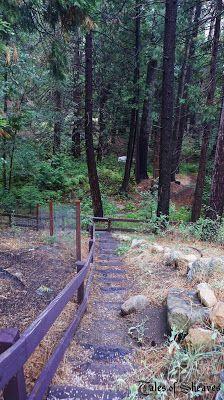 Steps to Strawberry Creek, Idyllwild, CA #talesofsheaves