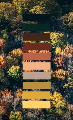 Fall colors in the forest. Color scheme and color palette nature photography inspiration.These color palettes and color schemes are from my own photographs. Nature Color Palette, Colour Pallette, Colour Schemes, Color Combos, Color Patterns, Forest Color, Colour Board, Color Stories, Color Swatches