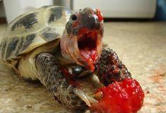Las siguientes imágenes muestran a animales devorando frutas como de película de terror. No dejes de verlas.