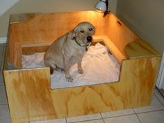 20 Comfy and Classy Whelping Box Ideas - Tail and Fur