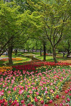 Tulip garden, Showa Memorial Park, Tokyo, Japan