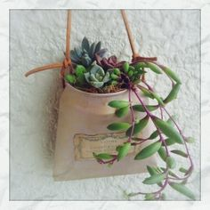 Cute small succulent wall decor