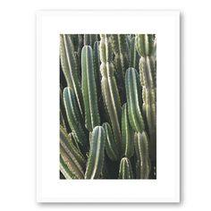 Shop the Art | Cactus