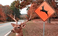 Fremont Insurance Reminds Motorists Of Dangers Of Vehicle-Deer Collisions As Hunting Season Approaches