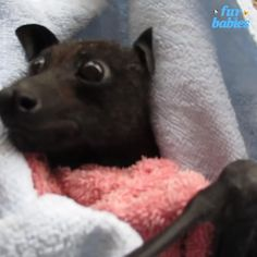 #bat #animal #animals #animalrescue #pets #pet