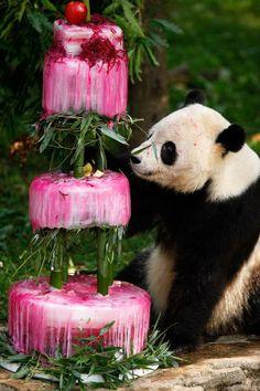 Giant panda Tai Shan checks out his birthday cake at the National Zoo Thursday in Washington, DC. Aw.