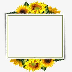 Sunflower border PNG and Clipart Sunflower Clipart, Sunflower Png, Sunflower Party, Sunflower Wedding Invitations, Flower Invitation, Background Pictures, Paper Background, Invitation Background, Sunflowers Background