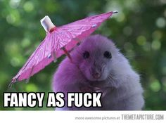 funny hamster tiny umbrella cute