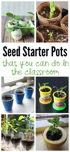 These seed starter pots are perfect for the classroom and provide a valuable real life hands on way for kids to learn about how plants grow.