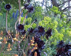 Plant Combinations - Northern California Gardens mediterranean landscape