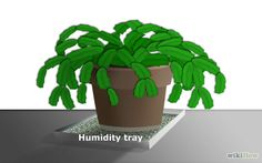 How to Care for a Christmas Cactus: 7 Steps (with Pictures); final paragraph tells peat moss, soil, etc. for repotting in Feb. or March.