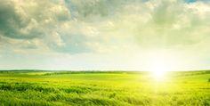 Auf dem ersten Blick scheint das Weizengras, wie ein gewöhnliches grünes Gras. Das Weizengras gehört jedoch weltweit zu dem stärksten natürlichen Entgiftungsmittel. http://superfood-gesund.de/weizengras/