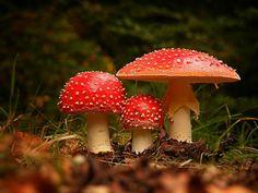 Foto Rood met witte stippen door ytje123