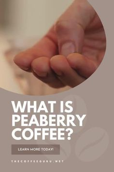 A Peaberry coffee bean is rare coffee bean that makes up around 5 to 10 % of a harvest. It's peculiar shape and rarity makes it high demand. Learn more about this coffee bean today! #peaberrycoffee #typesofcoffeebeans #coffeebeans #peaberry Coffee Type, Best Coffee, Kauai Coffee, Types Of Coffee Beans, Street Coffee, Arabica Coffee Beans, Fresh Roasted Coffee, Coffee Facts, Coffee Company