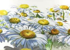 Watercolor+Daisies | Watercolor Painting Demonstration - White Shasta Daisies by Artist ...