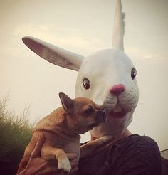 My mum is a Hare! #maus #chihuahua