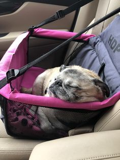 Pug Napping in Doggy Car Seat Berkeley-Quinn 🐾🐾 trending dog products from our store and get up to off. You will not find this rare products in any other store, so grab this Limited Time Discount Now! Pug Love, I Love Dogs, Dog Car Seats, Puppy Car Seat, Pug Accessories, Chihuahua Puppies, Cute Pugs, New Puppy, Cute Baby Animals