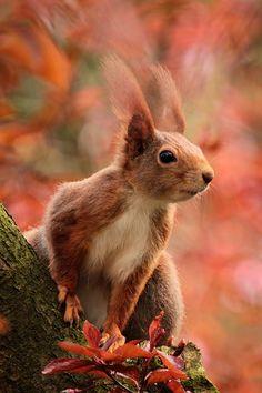 Tier, Eichhörnchen, Aufmerksam, Sitzend, Baum