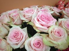 Sophie rose from South America Wholesale Florist, Light Pink Flowers, Sky Design, Color Show, South America, Flower Power, Flora, Roses, Plants