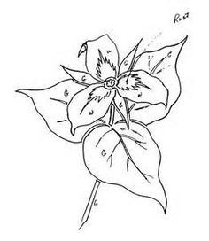 Trillium Pencil Sketch Of Flower By Artist Emily Dewbre-Young.   My Style   Pinterest   Pencil ...