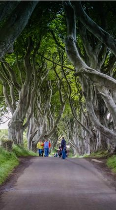 "The Dark Hedges, featured in Game of Thrones, Northern Ireland Explore the tree tunnel from ""Game of Thrones"" In Northern Ireland. Ireland's Causeway Coast- See the Giant's Causeway, Dark Hedges & Belfast at http://www.divergenttravelers.com/irelands-causeway-coast-giants-causeway-dark-hedges-belfast/"