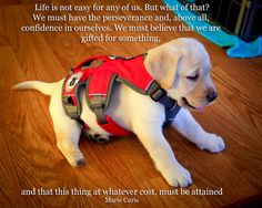 D- Service Dog in training : )
