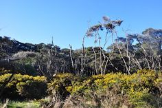 South Island, New Zealand, Plants, Scary, Nice Asses, Pictures, Plant, Planets
