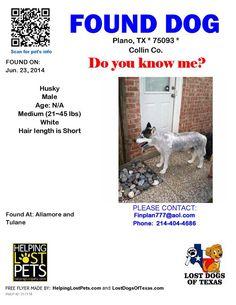 #Founddog 6-23-14 #Plano #TX Allamore & Tulane #SiberianHusky Male 214-404-4686 finplan777@aol.com https://m.facebook.com/story.php?story_fbid=790909084273773&id=354914621206557