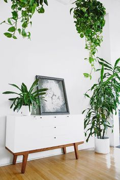absolutely want to use natural wood and plants to brighten up the space