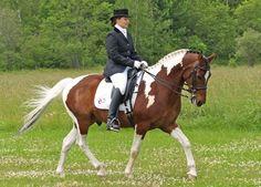 American Paint horse <3